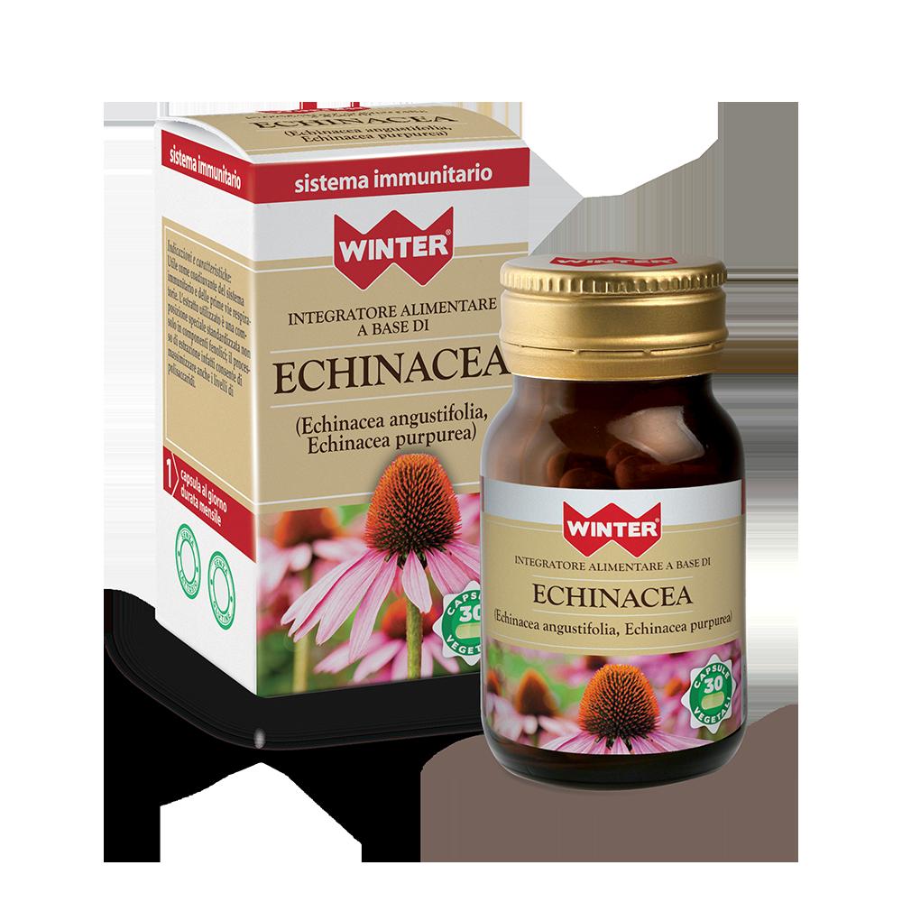 Echinacea Difese immunitarie Winter